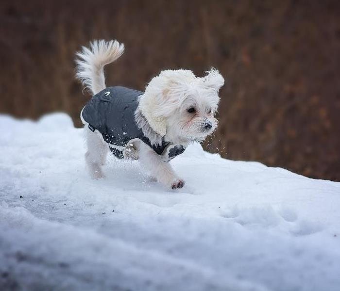 Storm Damage Winter Weather and Your Pets