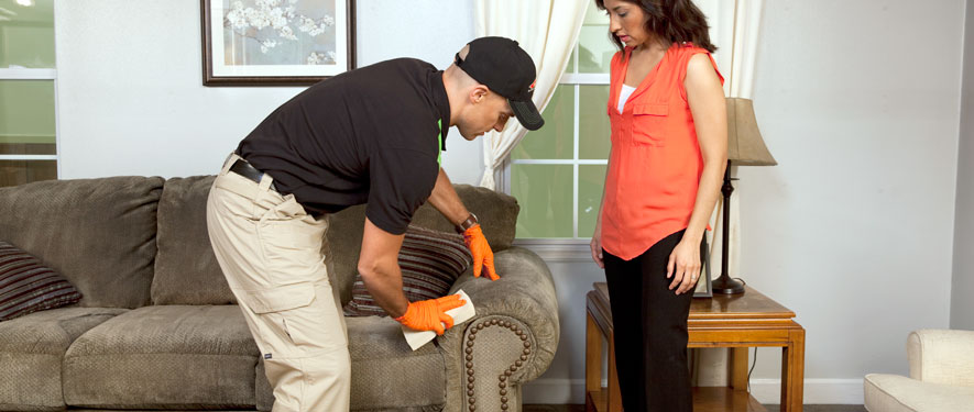 Edgewater, MD carpet upholstery cleaning
